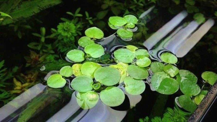 Những loại cây thủy sinh ấn tượng mà bạn nên trồng